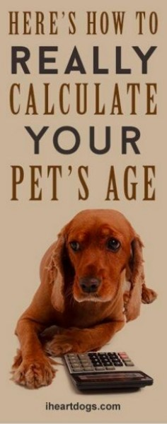 Here's How To Really Calculate Your Pet's Age