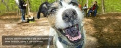 Home Jack Russell Terrier Photo