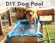 Hot pup? Cool them down quick with a homemade pool.