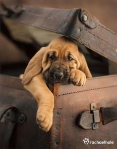 ** hound