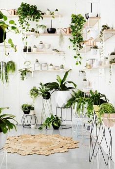 houseplants display ideas (5)