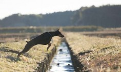 How #dogs find their way home (without a GPS)