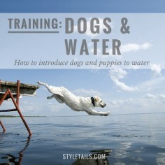 How to introduce dogs and puppies to water.