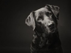 How to take dog portraits. Some very unusual ones shown, but good tips and tricks too.