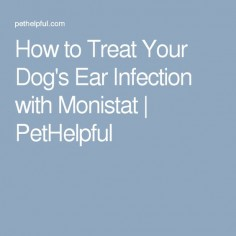 How to Treat Your Dog's Ear Infection with Monistat | PetHelpful