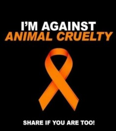 I am against animal cruelty!!!