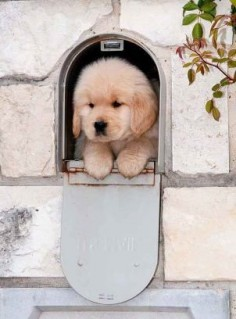 I definitely would not mind if I got a puppy in the mail! This little guy is pure fluff, and pure cuteness!