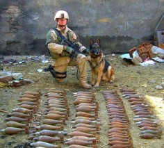 I found ALL this! Military Working Dog (MWD)
