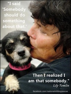 I have adopted rescue dogs and fostered dogs needing homes - what a wonderful feeling. It may not seem like much to a lot of people, but it sure means something to that one life.