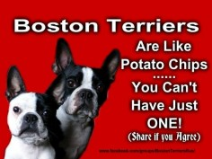 I love Boston Terrier's if you dont know and if you're looking to adopt one of these awesome pups, check out the Old Dominion Boston Terrier Rescue!