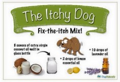 I love my dog, and I want the best for his itchy skin during allergy season