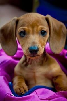 I NEED THIS DOG