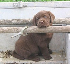 I want this little chunk!
