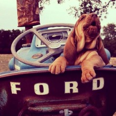 I want this puppy!