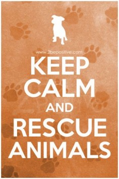 I will be looking to do volunteer work with animals at rescues and local facilities this year! My dogs are rescues and mean so much to me, I want to help other animals in need!