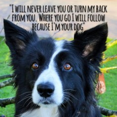 "#""I will never leave you or turn my back from you. Where you go I will follow, where you stay I will stay. Your friends will be my friends because… I'm your Dog…"" Woof 1:16 New in the life of !"