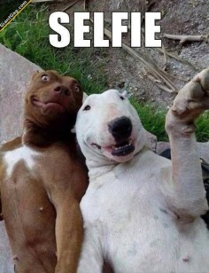 If Dogs Took Selfies LOL Love it!! | Click the link to view full image and description : )