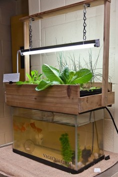 If you want to start an aquaponics system but don't know how to begin, there are many aquaponics plans and I'll be giving you a rundown of the simplest one.