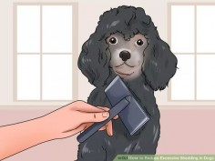 Image titled Reduce Excessive Shedding in Dogs Step 5