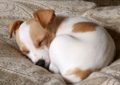 In case you ever wondered why #dogs curl up in a ball while taking a