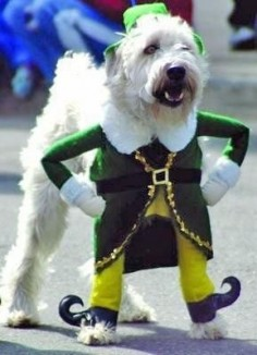 Irish dog~~Lol