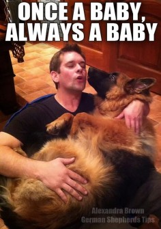 Is your German Shepherd like this?