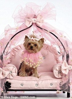 """Isn't it fabulous?"" #dogs #pets #YorkshireTerriers"