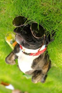 It's a dog's life. Fun in the sun