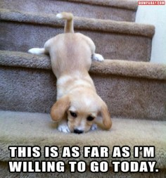 It's ok, puppy! I'm with you.
