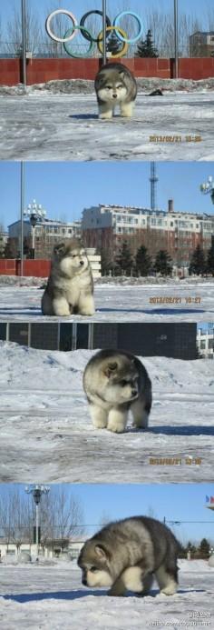 its soooo fluffy I'm gonna die!