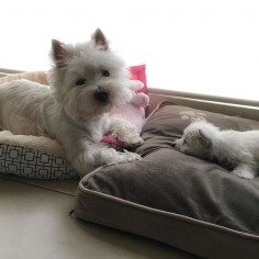 Just waiting for Eve to wake up so then I can have my bed back!... by emma_the_westie