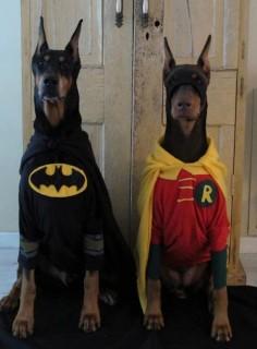 Kia needs a Robin to her Batman