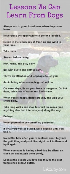 Lessons We Can Learn From Dogs - they are so naturally filled with love and gratitude for life