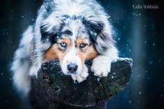 Let it snow by aussiefoto on DeviantArt
