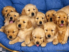 Let's not forget how ADORABLE they are as puppies.
