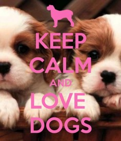 Love dogs