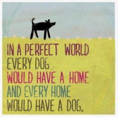 Love me dog!