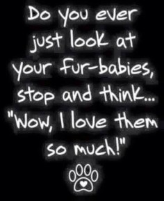 Loving our fur babies