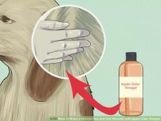 Make a Natural Flea and Tick Remedy with Apple Cider Vinegar Step 3