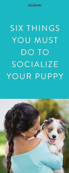 Make sure puppy playtime is always happy with these socialization tips.