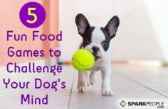 Mental stimulation is just as important for dogs as physical exercise. Here are five fun ways to challenge your dog's mind. via @SparkPeople