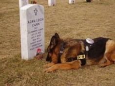 Military service dog at his handler's gravesite. What a bond! Brings tears to my eyes!