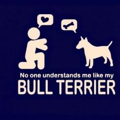 #MiniBullTerrier #Bullterrier #BullterrierPics #BullTerrierInstagram #ILoveDogs #ILoveBullTerrier #BullTerrierLove #BullTerrierStyle #EnglishBullTerrier #BullTerrierWorld #BullTerrierLife #Dogstagram #Doglovers #Doglife #DogOfInstagram #Dog #MyDog #Dogs #Art #Graphic