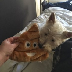 Mom thinks she was so funny when she got me this new toy in #NYC. She doesn't think it is funny when I gift her a pile of poop!