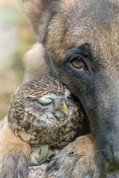 Moment de tendresse entre une chouette et un chien