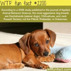 Most aggressive dogs - WTF fun facts