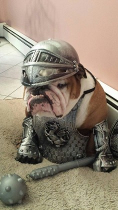 "❤ ""My mom says I'm HER baby in shinning armor & I say OK"" ❤ Posted on Baggy Bulldogs"