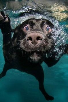 Naturally you think your puppy couldn't get any cuter, but have you played fetch underwater with them? Seth Casteel has and it's hilarious.