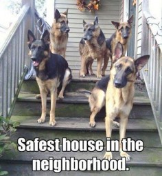 Need to have a good reason to visit? #dogs #pets #GermanShepherds