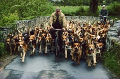 New way to take the hounds on a